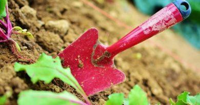 jardinage coronavirus
